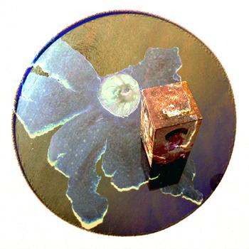 Enigmas circulares 09